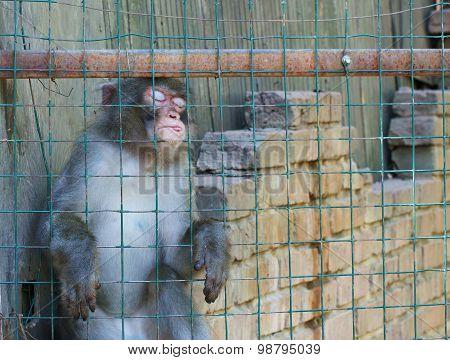 Funny sleeping monkey