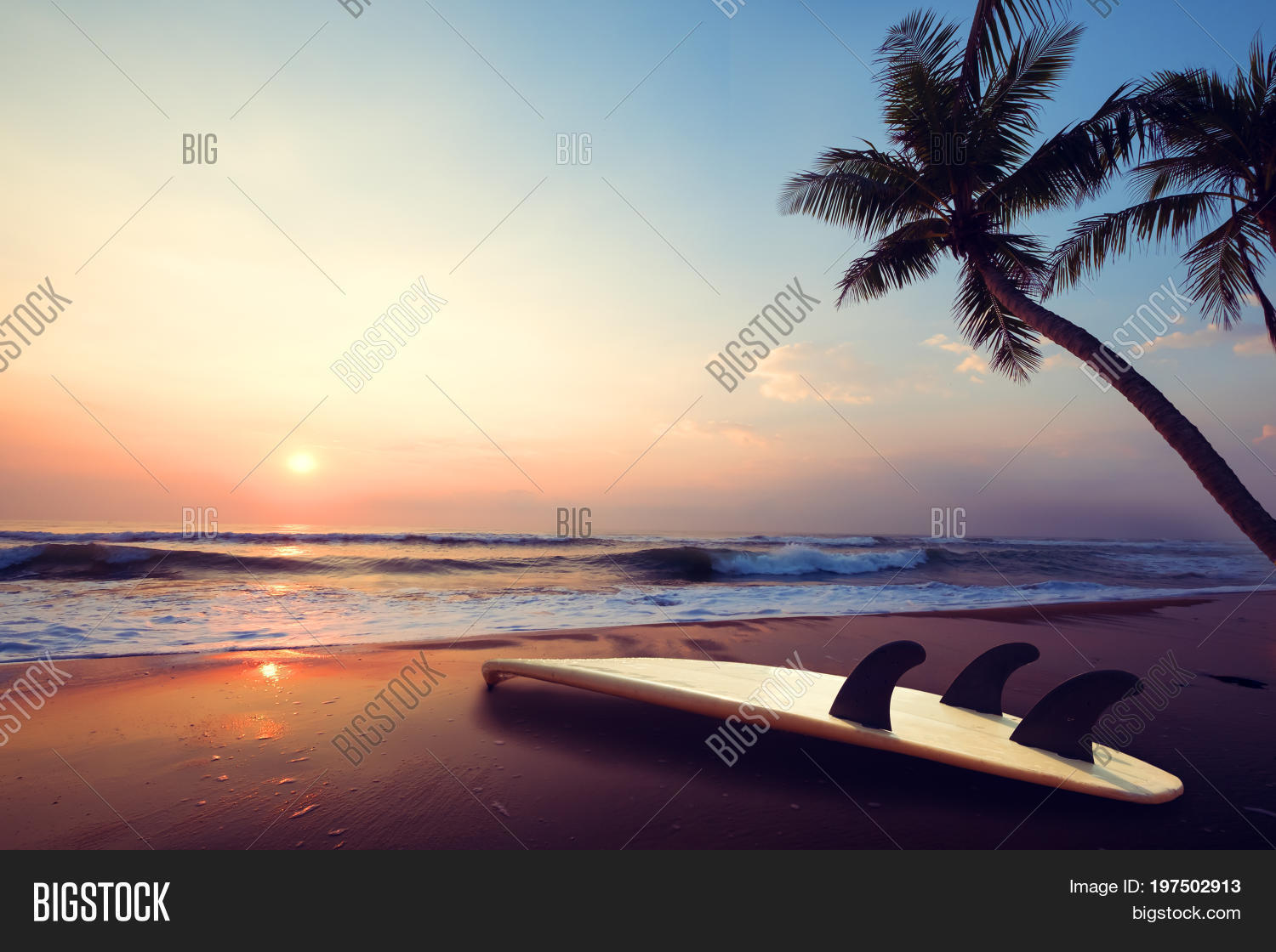 Silhouette Surfboard On Tropical Beach At Sunset In Summer Landscape Of And Palm