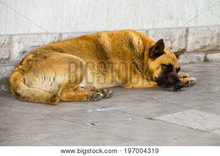 Homeless stray dog sleeping on the sidewalk