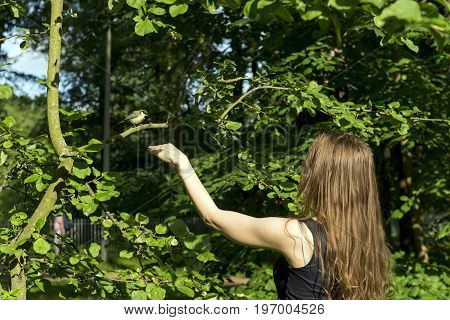 girl woman man extends hand to sitting on the tree branch the bird with yellow feathers