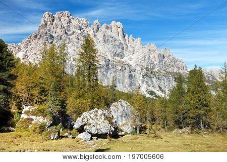 Larch wood and Cima Ambrizzola and Croda da Lago Iralien Alps Dolomites Mountains