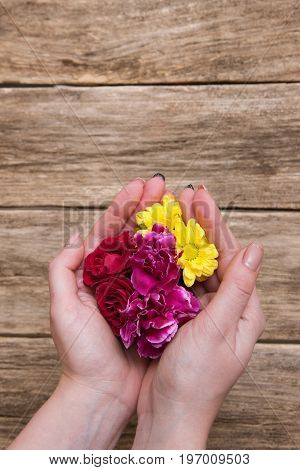 Rose, carnation and golden daisy holding in palm. Young woman gently holds flowers in hands, sensual floral, spa, alternative medicine and perfumery concept with free space above