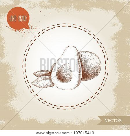 Hand drawn sketch avocado fruits composition. Whole anf half avocado. Bio food vintage illustration.