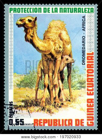 STAVROPOL RUSSIA - July 26 2017: A Stamp sheet printed in EQUATORIAL GUINEA shows African dromedary ( African cursor) circa 1974