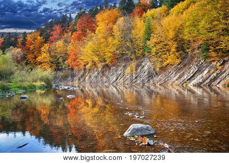 autumn forest by the river. Reflection in water