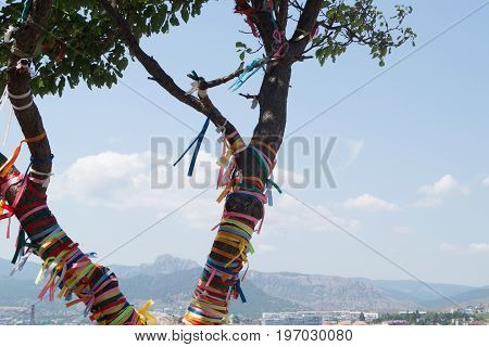 Tree decorated with colored ropes in the sunlight in Crimea Sudak
