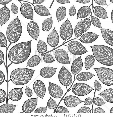 Seamless pattern of beautiful grey birch, honeysuckle leaves, twig, branches, sketch style vector illustration on white background. Hand drawn honeysuckle twig seamless pattern