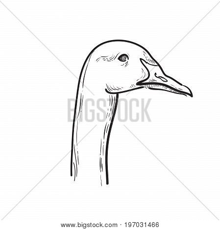 Hand draw sketch goose. Vector illustration, EPS 10