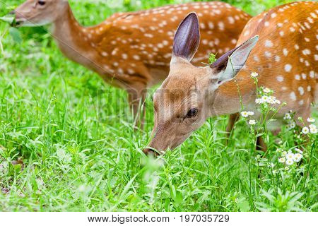 young deers in the forest in summer