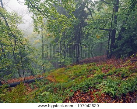 Mysterious Autumn Foggy Colorful Forest With Red Fallen Leaves And Moss And Ferns