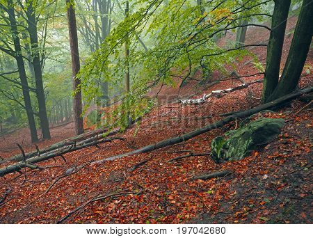 Mysterious Autumn Foggy Colorful Forest