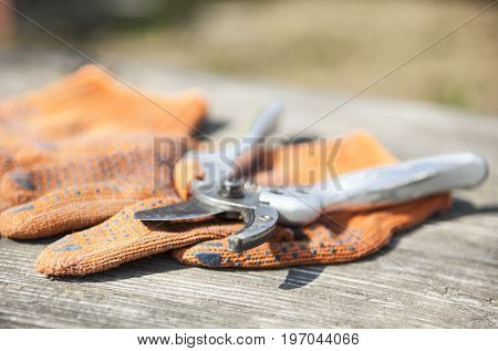 Pruning shears and orange protective gloves on the wooden surface.