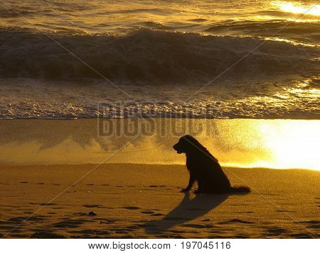 A SILHOUETTE OF A DOG WITH THE SHADOWS OF THE SUNSET REFLECTING ON THE WATER IN THE BACK GROUND