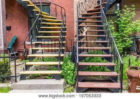 Montreal, Canada - May 27, 2017: Calico Cat Sitting On Stairs By Apartment In Plateau Neighborhood D