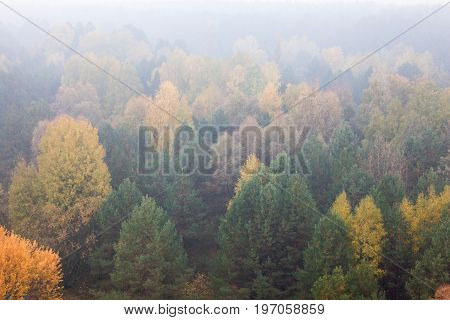Deciduous forest in the autumn foggy day.