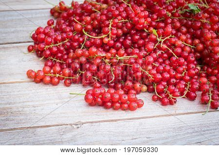 Fresh picked red currant berries on wodden table