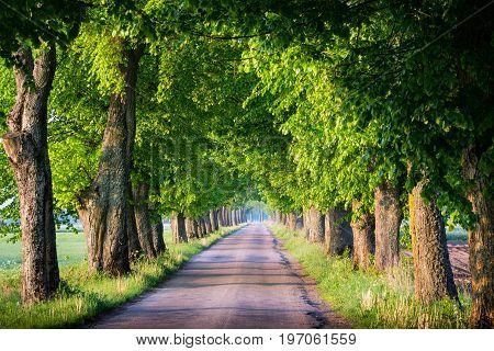 Countryside road among the trees. Masuria Poland.