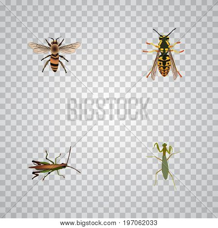Realistic Bee, Grasshopper, Locust And Other Vector Elements