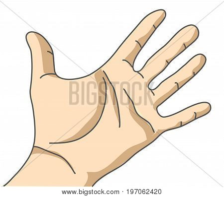 Palm hand isolate on white. Color vector illustration. EPS8
