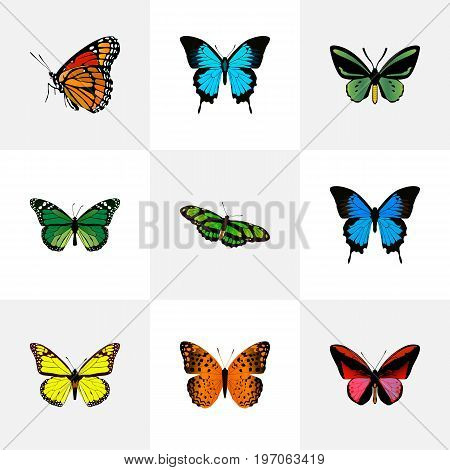 Realistic Common Blue, Papilio Ulysses, Danaus Plexippus And Other Vector Elements