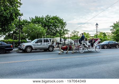Montreal, Canada - May 27, 2017: Old Town Area With Tour Guide On Road In Horse Carriage Buggy At Ni