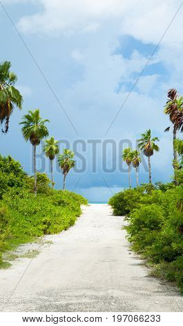 Horizon ahead at end of white sandy path leading between rows of palm trees and green undergrowth to beach