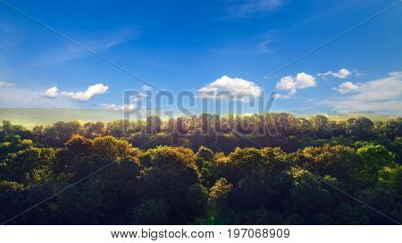forest top view by drone