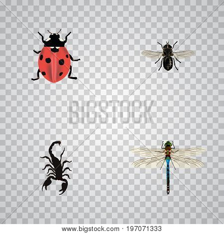 Realistic Ladybird, Damselfly, Poisonous And Other Vector Elements