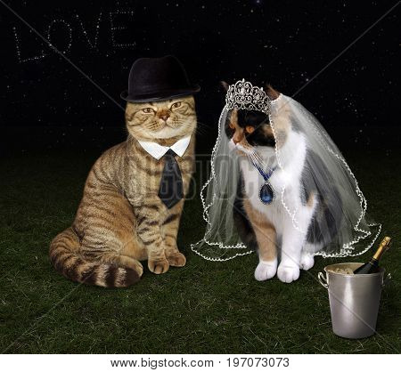 There is a cat's wedding under the stars.
