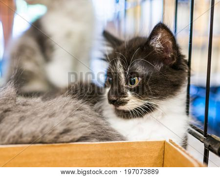 Portrait of one black and white tiny kitten in cage waiting for adoption