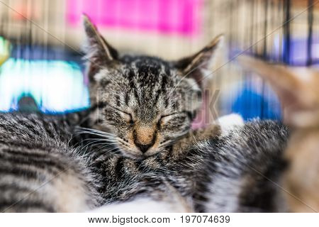 Portrait Of One Tabby Kitten In Cage Sleeping Cuddling Siblings Waiting For Adoption