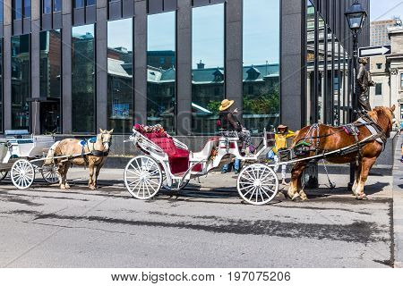Montreal, Canada - May 28, 2017: Old Town Area With Tour Guide On Road In Horse Carriage Buggy Durin