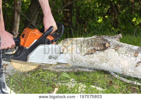 Man cuts tree with chainsaw. A man in a camouflage suit protective boots and gloves saws chainsaw old rotten tree in the forest. Next lay cut pieces of wood and splinters. Chainsaw flying chips and sawdust.