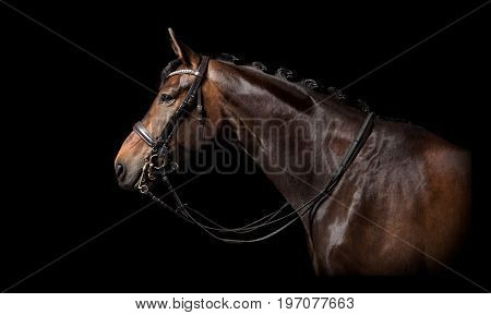 Brown Horse Black Background