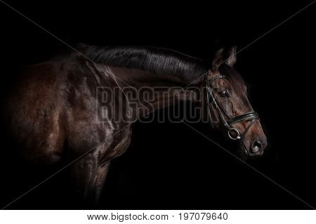 Riding Horse With Bridle
