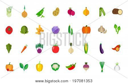 Harvest icon set. Fennel Onion Peas Potato Beetroot Tomato Cabbage Ginger Cucumber Pumpkin Garlic Artichoke Lettuce Carrot Kohlrabi Corn Eggplant Peppers Spinach Cauliflower Beet Green onion