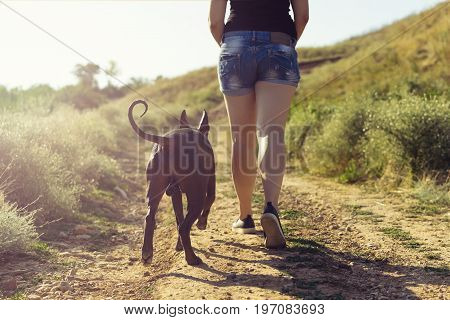 Young Caucasian Woman Running Along A Dirt Road Uphill Next To Her Dog At Sunset In Summer. Back To