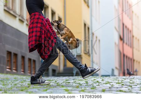 Small Dog Climbs On The Leg Of A Young Woman