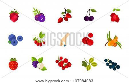 Wild berries icon set. Raspberry Acai Dogrose berry Dark bird cherry Cowberry Blueberry Goji Picking berry Cranberry Sea buckthorn Strawberry Mulberry Red currant Gooseberry Currant