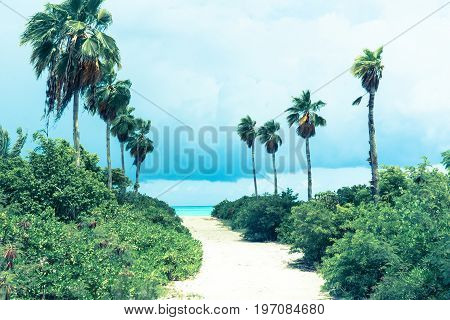 Retro styled image horizon ahead at end of empty white sandy path leading between rows of palm trees and green undergrowth to beach on windy day