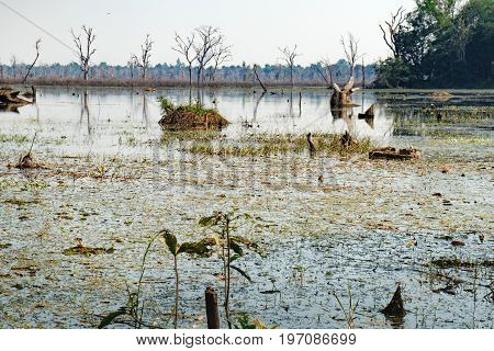 Beautiful artificial lake with with trees and other vegetation around the Neak Pean Temple in Angkor Complex, Siem Reap, Cambodia.