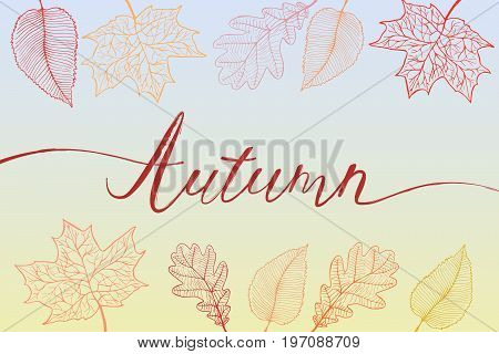 Autumn brush hand written title with colorful bright leaves. Vector illustration in eps8 format.