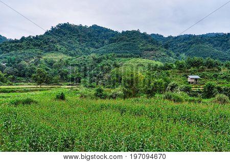 Green Countryside In Luang Nam Tha, Laos
