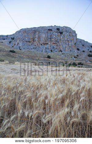 Wheat field at mountain range of Antequera Malaga Spain. Sunset