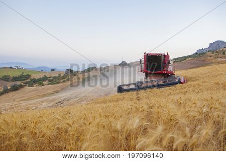 Harvester gathering wheat at mountain area of Antequera Spain. Combine machine working on sloping ground