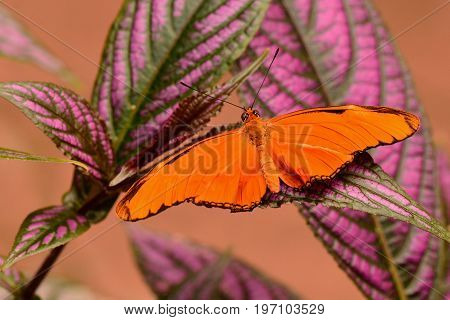 A orange Julia butterfly lands on a plant in the gardens.