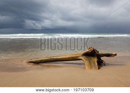Driftwood log at beach and storm clouds Costa Rica