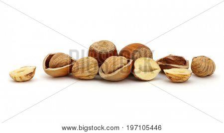 Hazelnut group many isolated on white background.
