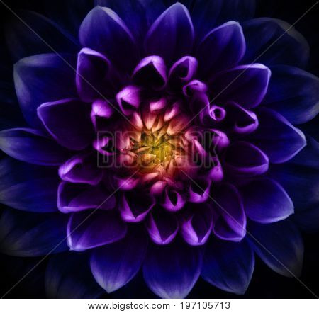 Abstract flower and beautiful petals