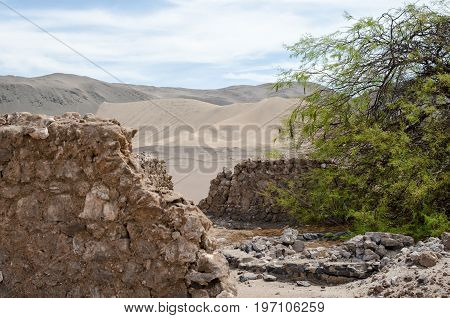 Green tree and ruins of well in the middle of desert
